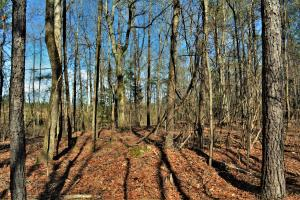 Coaling Timber Investment and Hunting Property in Tuscaloosa, AL (6 of 16)