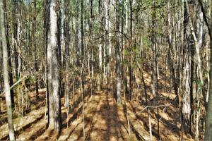 Coaling Timber Investment and Hunting Property in Tuscaloosa, AL (15 of 16)