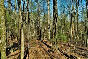 Coaling Timber Investment and Hunting Property in Tuscaloosa, AL (7 of 16)