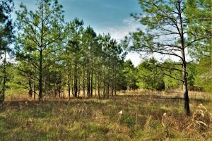 Coaling Timber Investment and Hunting Property in Tuscaloosa, AL (16 of 16)