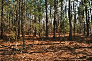 Coaling Timber Investment and Hunting Property in Tuscaloosa, AL (12 of 16)