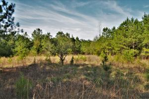 Coaling Timber Investment and Hunting Property in Tuscaloosa, AL (11 of 16)