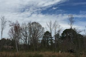 Lucama Wooded Industrial Zoned Lot in Wilson, NC (2 of 4)