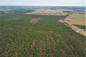Lenoir County Timber/Hunting Tract in Lenoir, NC (3 of 5)
