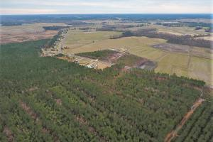 Lenoir County Timber/Hunting Tract in Lenoir, NC (2 of 5)
