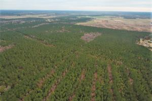 Lenoir County Timber/Hunting Tract in Lenoir, NC (4 of 5)