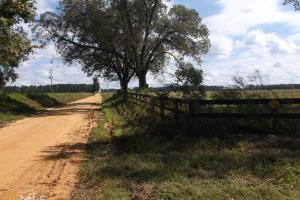 Claxton Recreational Tract - Evans County GA