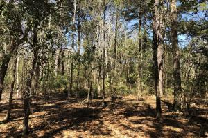 Deepwater Deloss Point Vacant Waterfront Lot in Jasper, SC (22 of 31)