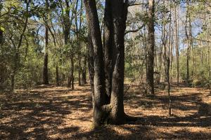 Deepwater Deloss Point Vacant Waterfront Lot in Jasper, SC (20 of 31)