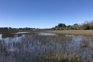 Deepwater Deloss Point Vacant Waterfront Lot in Jasper, SC (13 of 31)