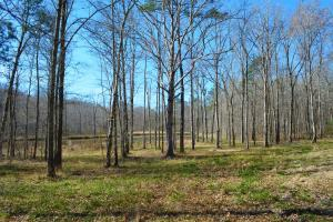 Coldwater Preserve in Talladega, AL (32 of 42)