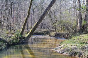 Coldwater Preserve in Talladega, AL (3 of 42)