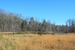 Coldwater Preserve in Talladega, AL (10 of 42)