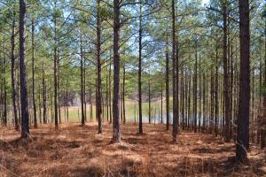 Coldwater Preserve in Talladega, AL (22 of 42)
