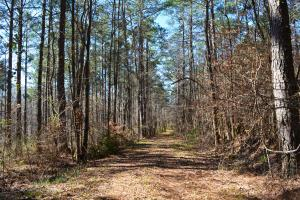 Coldwater Preserve in Talladega, AL (26 of 42)