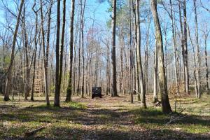 Coldwater Preserve in Talladega, AL (12 of 42)