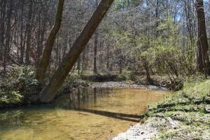 Coldwater Preserve in Talladega, AL (6 of 42)