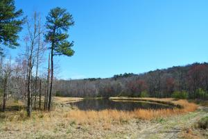 Coldwater Preserve in Talladega, AL (18 of 42)
