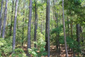 Moncks Corner Area Large Acreage Homesite