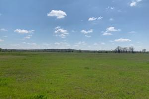 Open lush meadows for grazing on 230 acres at Purtis Creek Ranch (20 of 48)