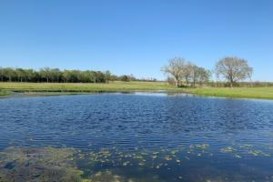 Stocked pond on 230 acres North of Eustace (47 of 48)