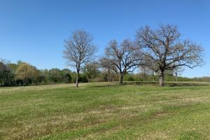 Mature oaks on 230 acres at Purtis Creek Ranch (21 of 48)