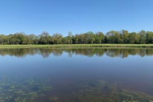 Nice size pond for recreational fishing on Purtis Creek Ranch (32 of 48)
