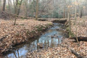 Travelers Rest Hardwoods and Creeks in Greenville, SC (2 of 46)