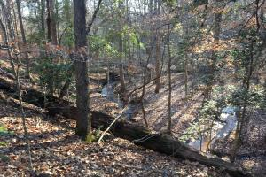 Travelers Rest Hardwoods and Creeks in Greenville, SC (32 of 46)