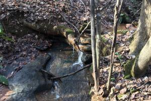 Travelers Rest Hardwoods and Creeks in Greenville, SC (5 of 46)