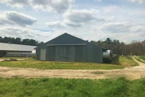 Reevesville Chicken Farm in Orangeburg County, SC (21 of 28)