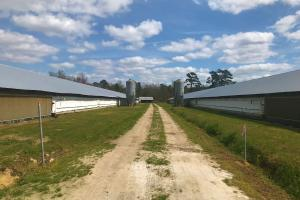 Reevesville Chicken Farm in Orangeburg County, SC (3 of 28)