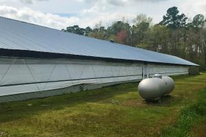 Reevesville Chicken Farm in Orangeburg County, SC (24 of 28)