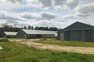 Reevesville Chicken Farm in Orangeburg County, SC (22 of 28)
