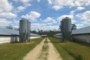 Reevesville Chicken Farm - Orangeburg County SC