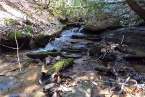 Small falls, Unrestricted Mountain Forest with Bold Creek  (2 of 15)