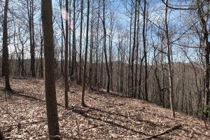 Unrestricted Mountain Forest with Bold Creek  - Henderson County NC