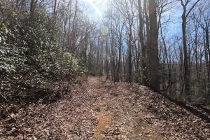 Trails for ATVs or horses, Unrestricted Mountain Forest with Bold Creek  (6 of 15)