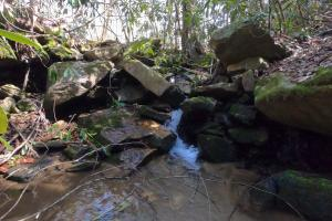 Small pools and falls, Unrestricted Mountain Forest with Bold Creek  (9 of 15)