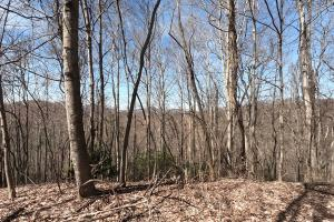 Long range views, Unrestricted Mountain Forest with Bold Creek  (8 of 15)