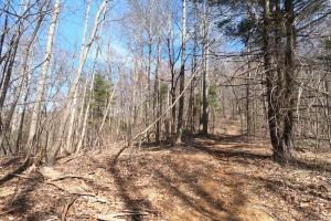 Trails throughout the property, Unrestricted Mountain Forest with Bold Creek  (10 of 15)