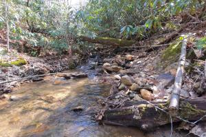 Unrestricted Mountain Forest with Bold Creek  - Henderson County, NC