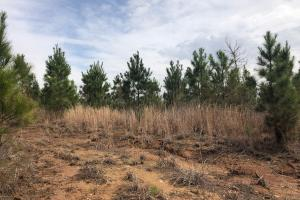 Calhoun County Hunting and Investment Tract