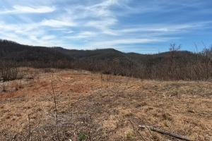 Large Rolling Clear-cut Tract with Views - Henderson County NC