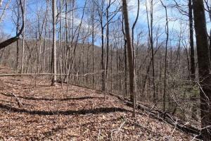 Interior trails, Unrestricted Woodland Acreage near Edneyville (2 of 18)