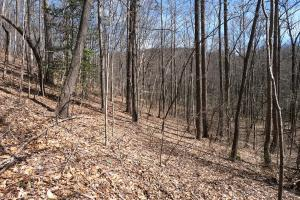 Gentle slopes on southern portion, Unrestricted Woodland Acreage near Edneyville (14 of 18)