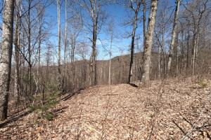 Northern section of property, Unrestricted Woodland Acreage near Edneyville (17 of 18)