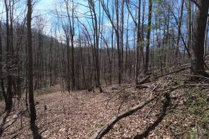 Easy trail access, Unrestricted Woodland Acreage near Edneyville (16 of 18)