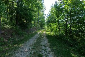 Homes Ln access Rd, Unrestricted Woodland Acreage near Edneyville (8 of 18)