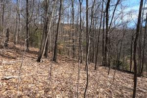 Wildlife habitat and woodlands, Unrestricted Woodland Acreage near Edneyville (3 of 18)
